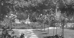Rose garden before the shy girl